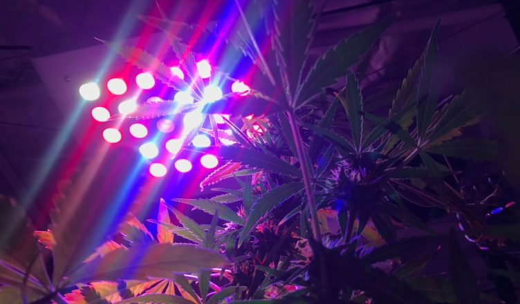 different types of LED grow lights